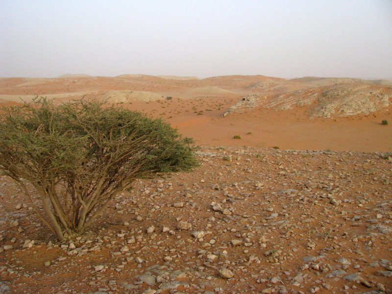 science fiction - the desert, loneliness and barren landscape