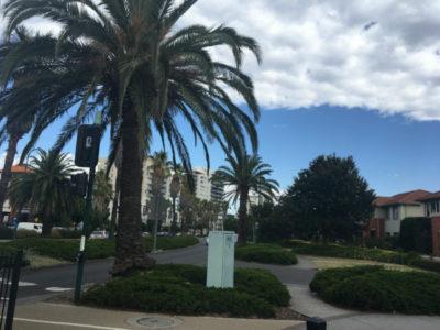 coastal urban design - Port Melbourne - brunch under the palm trees