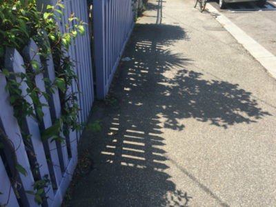 photography walks - garden shadow