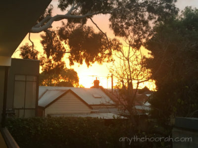 sunset over rooftops and gum tree