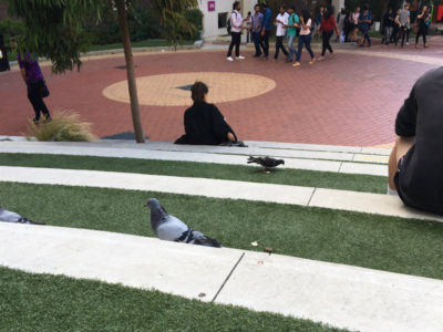 pigeons and people on the stairs at university