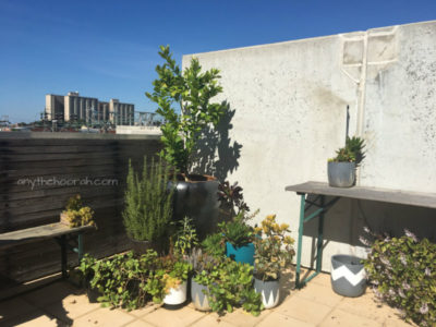 plants in the sun with view of rooftops