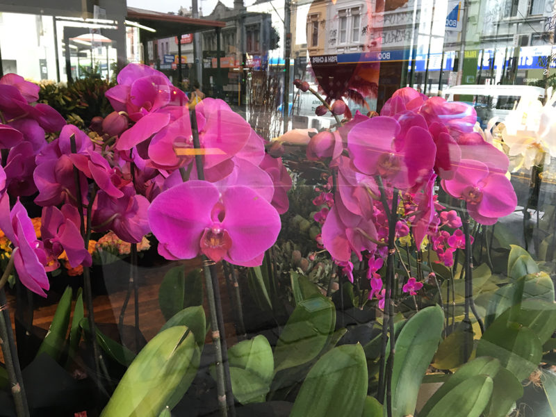 collection of bright magenta flowers with reflections of smith street collingwood outside tribal rose florist shop